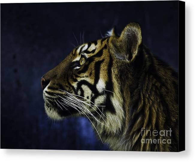 Sumatran Tiger Canvas Print featuring the photograph Sumatran Tiger Profile by Sheila Smart Fine Art Photography