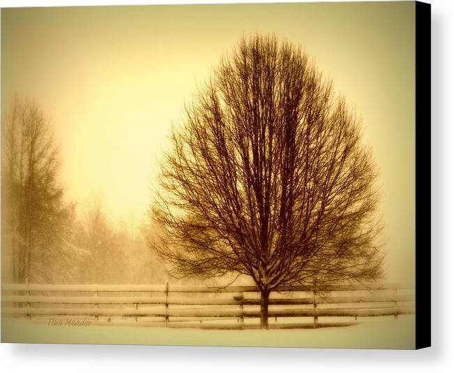 Winter Canvas Print featuring the photograph Winter Calm by Tina Meador
