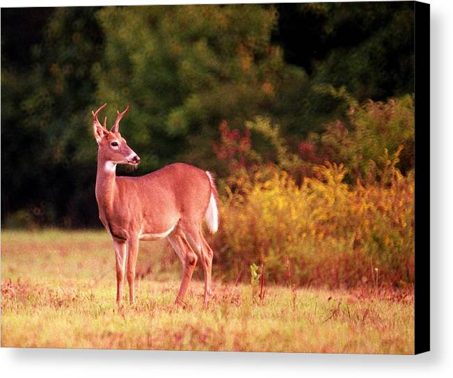Deer Canvas Print featuring the photograph 070406-58 by Mike Davis