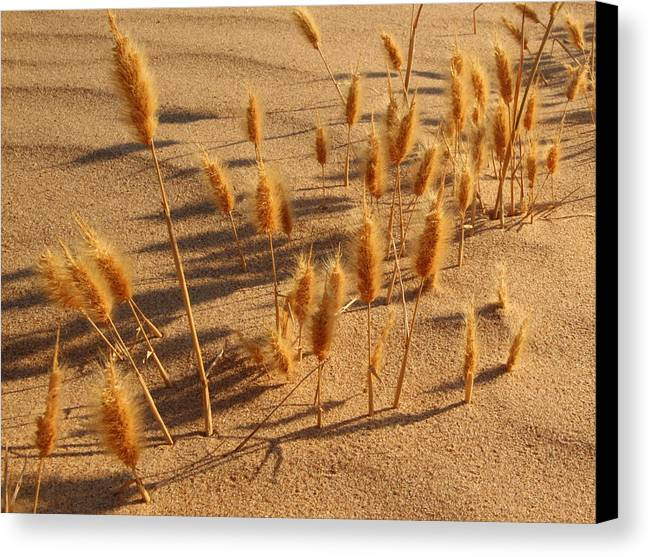 Brazos River Canvas Print featuring the photograph Seed And Sand by Andrew McInnes