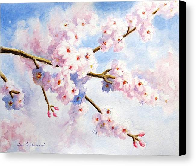 Almond Blossom Canvas Print featuring the painting Almond Blossom by Jan Calderwood
