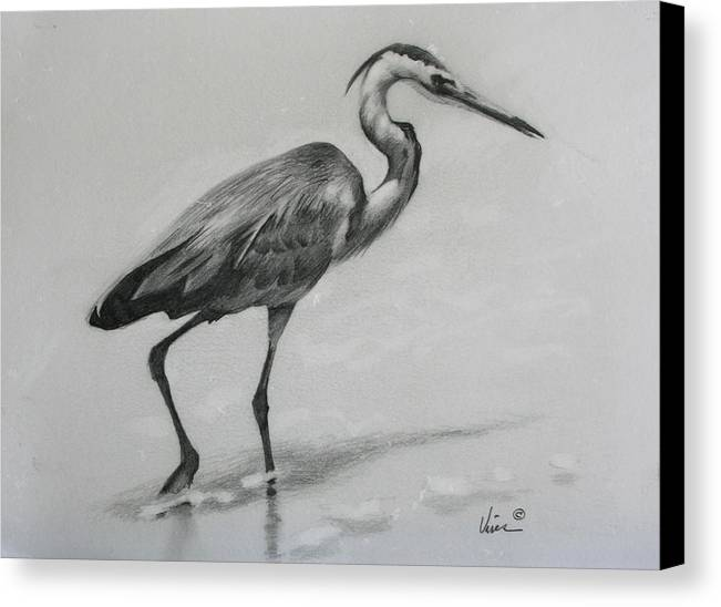 Graphite On Paper Canvas Print featuring the drawing Wader by Michael Vires