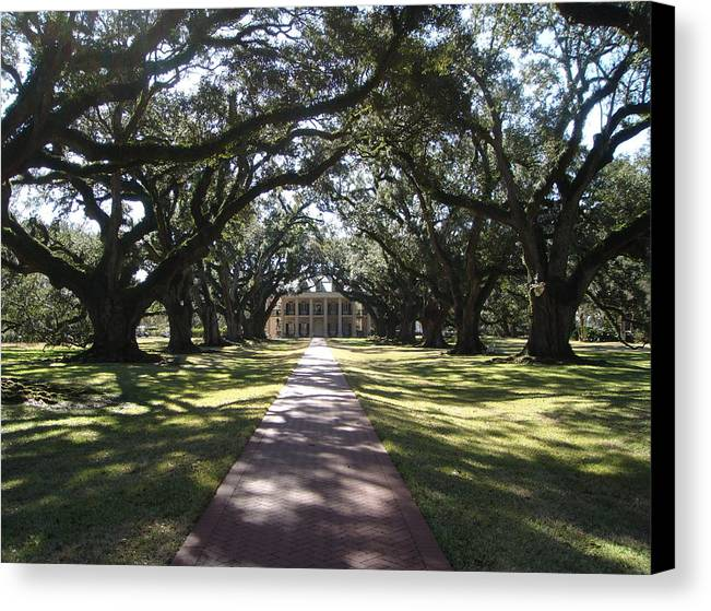 Plantation Canvas Print featuring the photograph Pathway by Karla Kernz