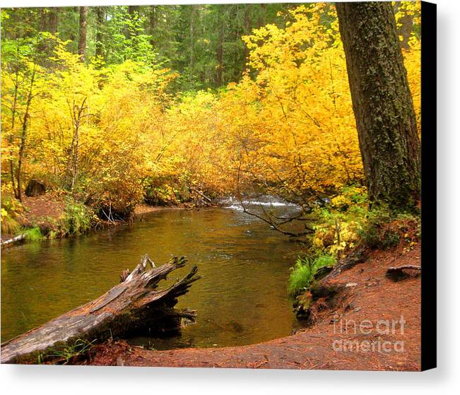 Serenity Scenes Photography Landscape Scenic Pacific Northwest Stream Forest Woods Trees River Rocks Shasta Eone Oregon Water Green Nature Union Creek Fall Autumn Canvas Print featuring the painting Us10-3 by Shasta Eone
