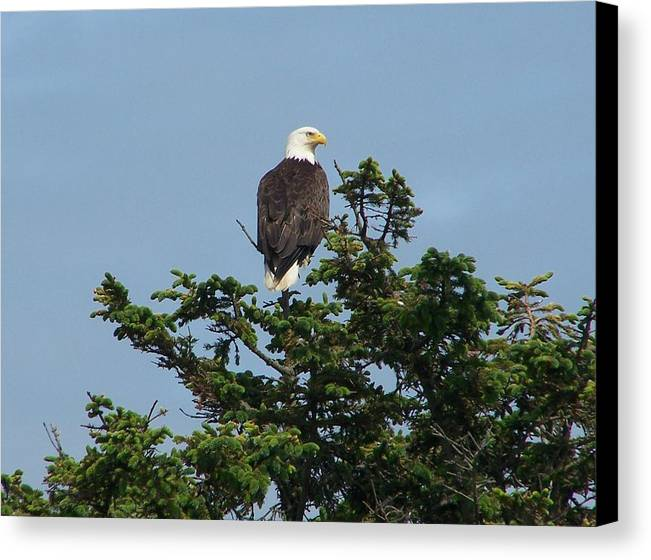 American Canvas Print featuring the photograph American Eagle by Mark Cheney