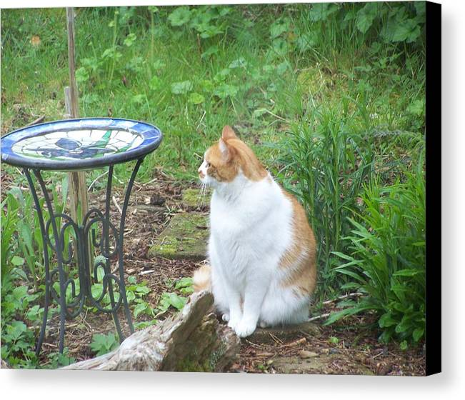 Cat Canvas Print featuring the photograph Patience by Mark Cheney