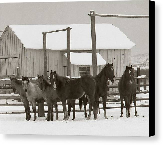 Horses Canvas Print featuring the photograph 71 Ranch by Diane Bohna