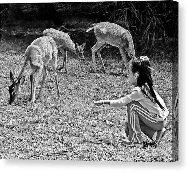 Children Canvas Print featuring the photograph Gaining Trust by Bob and Nadine Johnston
