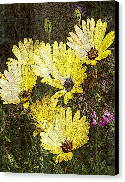 Digital Art Canvas Print featuring the digital art Daisy Daisy by Tom Romeo