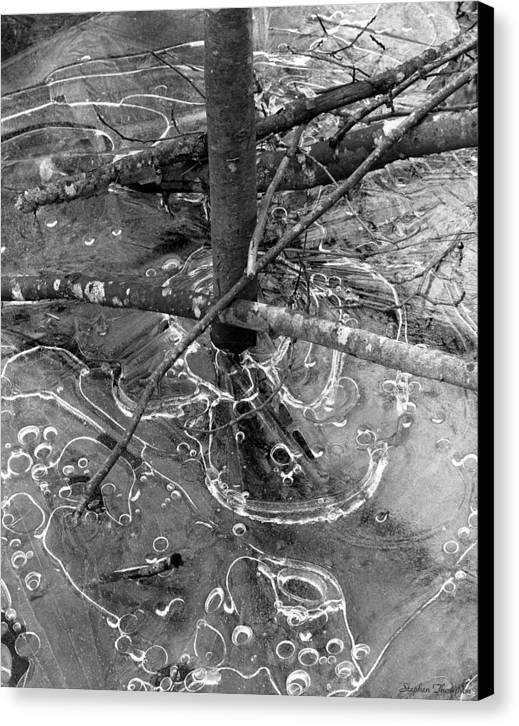 Black And White Canvas Print featuring the photograph Alder And Ice by Stephen Thompson