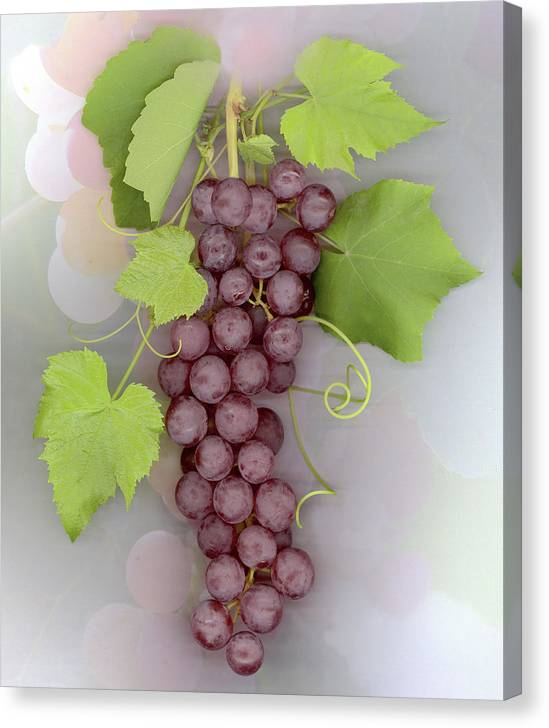 Grapes Canvas Print featuring the photograph Grapes on Grapes by Sandi F Hutchins