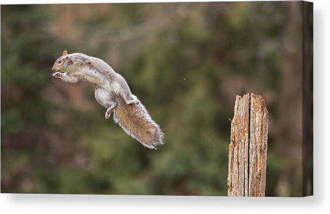851_0042 Canvas Print featuring the photograph Look No Wings by Christopher Schlaf