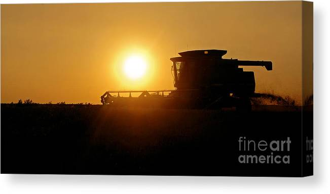 Harvest Canvas Print featuring the photograph Harvest Gold by Gib Martinez