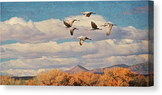 Nature Canvas Print featuring the photograph Sandhill Cranes over Bosque del Apache Wildlife Refuge, New Mexico by Zayne Diamond Photographic