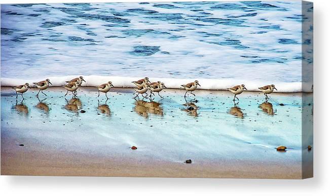 Animal Themes Canvas Print featuring the photograph Shorebirds by Vanessa Mccauley