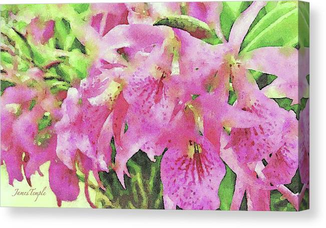Pink Orchids Canvas Print featuring the digital art Pink Orchids by James Temple