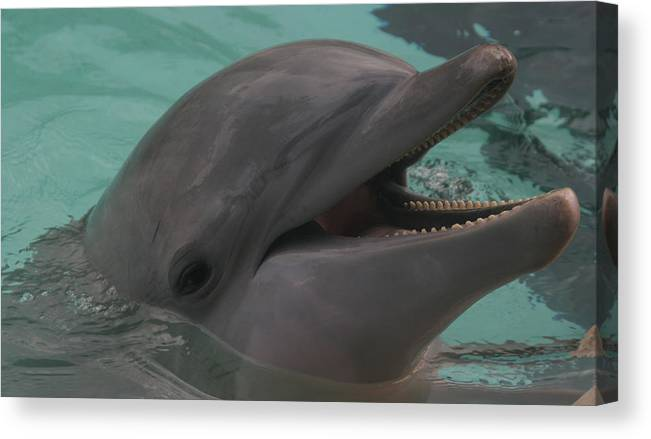 Dolphin Canvas Print featuring the photograph Dolphin by Dervent Wiltshire