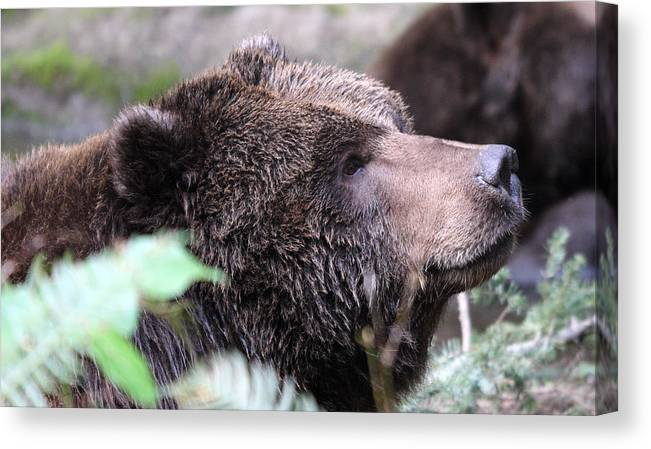 Northwest Trek Canvas Print featuring the photograph Grizzley - 0010 by S and S Photo