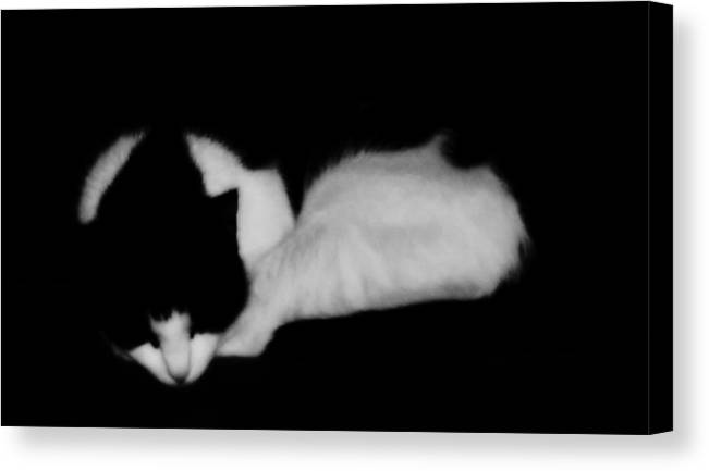 Cat Canvas Print featuring the photograph Rockie in black and white by Joseph Ferguson