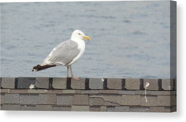 Seagull Canvas Print featuring the photograph Taking in the View by Jessica Cruz