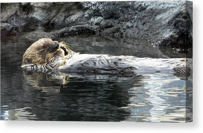 Aquarium Canvas Print featuring the photograph Lazy Day by Larry Keahey