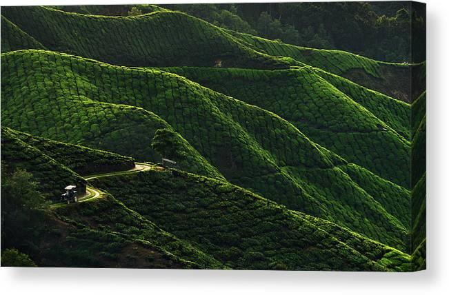 Landscape Canvas Print featuring the photograph Lines by Jordan Lye