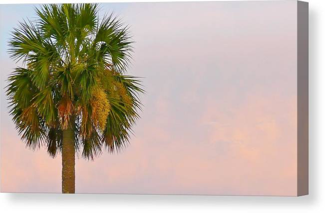 Palm Canvas Print featuring the photograph Sunset Palm by Scott Waters