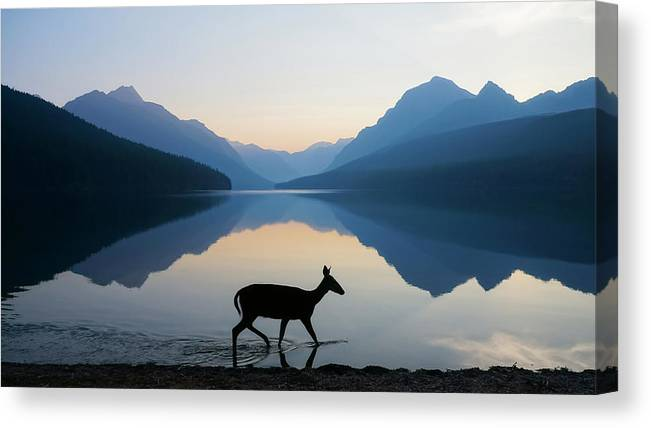 Glacier National Park Canvas Print featuring the photograph The Grace of Wild Things by Dustin LeFevre