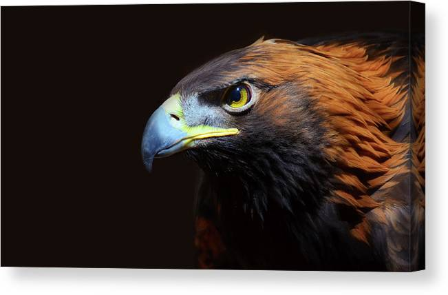 Animal Themes Canvas Print featuring the photograph Female Golden Eagle by A L Christensen
