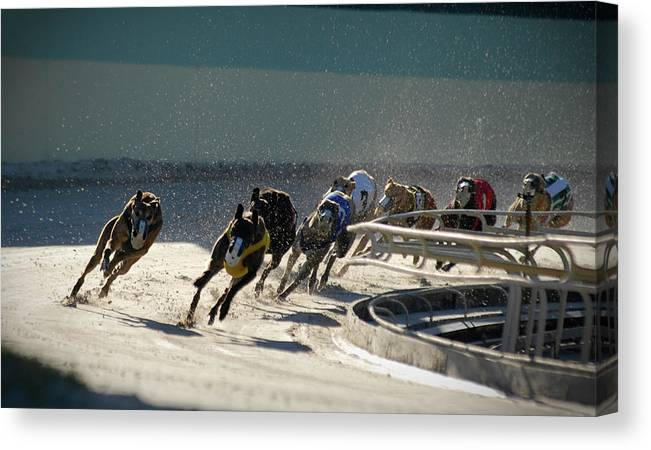 Dust Canvas Print featuring the photograph Greyounds 3 Of 7 by Dplight