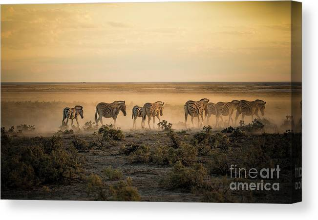 Dawn Canvas Print featuring the photograph Namibia, Etosha National Park, Herd by Westend61