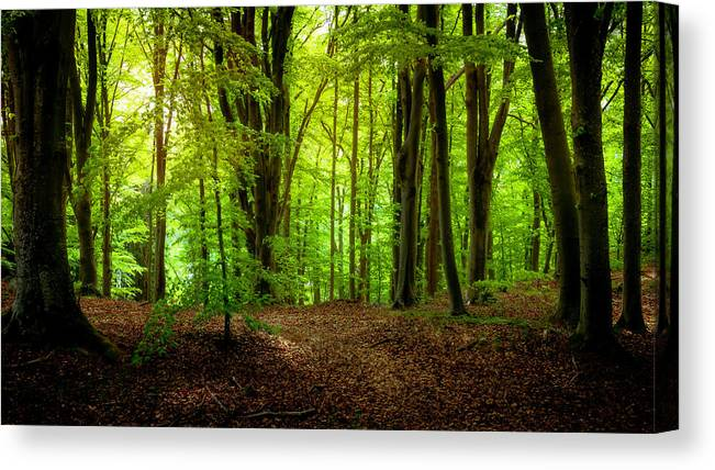 Beech Canvas Print featuring the photograph Summer Forest by Nicklas Gustafsson