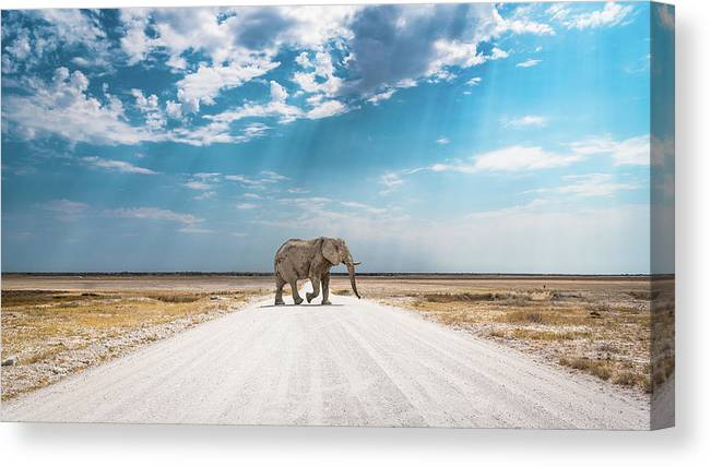 Elephant Canvas Print featuring the photograph Under An African Sky by Hamish Mitchell