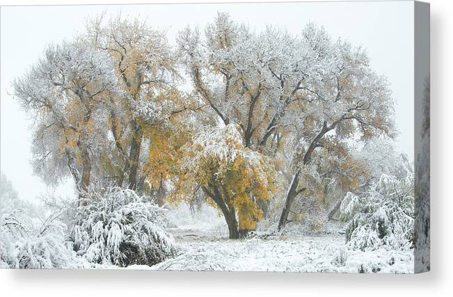 Winter Canvas Print featuring the photograph Quite Winter Beauty by Zayne Diamond Photographic