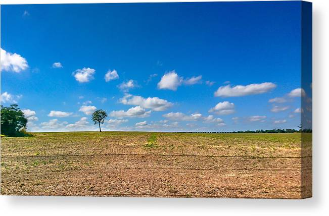 Scenics Canvas Print featuring the photograph The loneliness of the tree in the middle of the soy plantation in the rural area of Piracicaba. by CRMacedonio