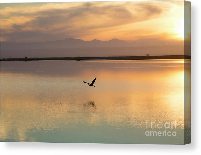 Heron Canvas Print featuring the photograph Heron at sunset by Sheila Smart Fine Art Photography