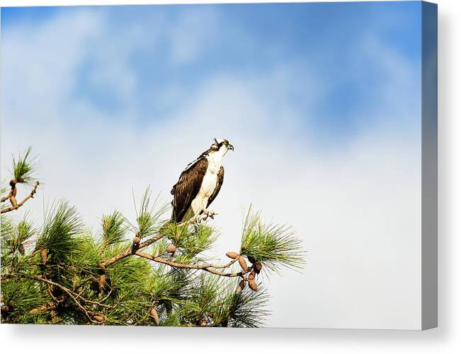 Osprey Canvas Print featuring the photograph On High by Michael McStamp