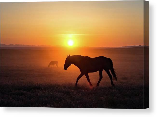 Sunset Mustang Stallion by Dirk Johnson