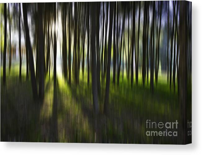 Trees Abstract Tree Lines Forest Wood Canvas Print featuring the photograph Tree abstract by Sheila Smart Fine Art Photography