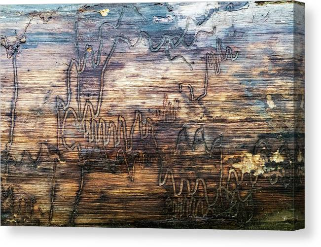 Nature Canvas Print featuring the photograph Graffiti in the Wild by Tom Romeo