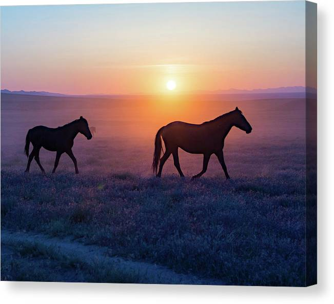 Violet Sunset Mustangs by Dirk Johnson