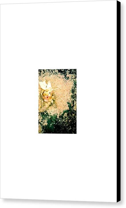 Collage Abstract Canvas Print featuring the photograph Streetart...chinadoll by David M Davis