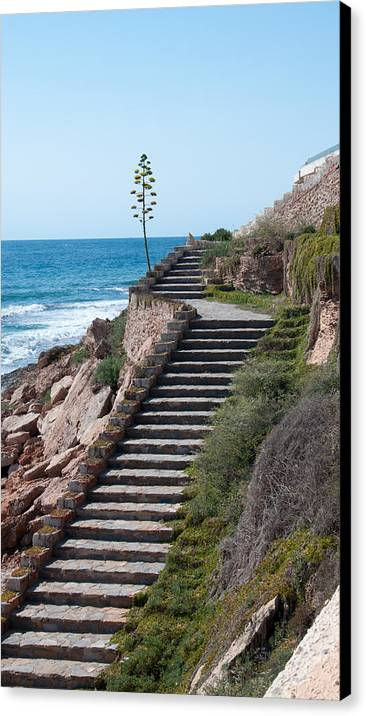 Ocean Canvas Print featuring the photograph Stairway And Agave On Top. by Ingela Christina Rahm