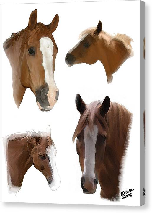 Arabian Horse Canvas Print featuring the painting The Faces of T by Elzire S