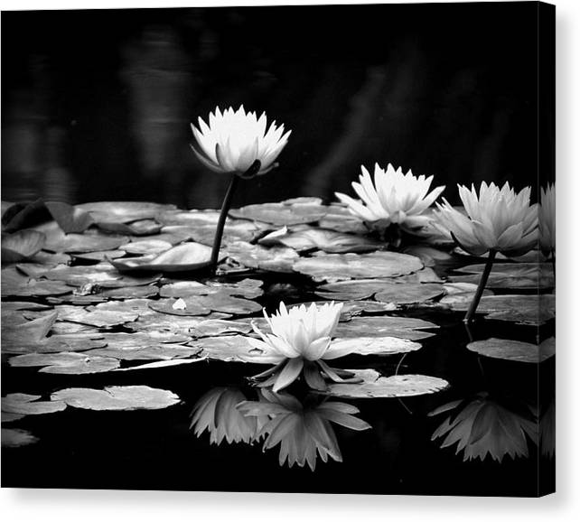 Limited Time Promotion: Black And White Water Lily Stretched Canvas Print