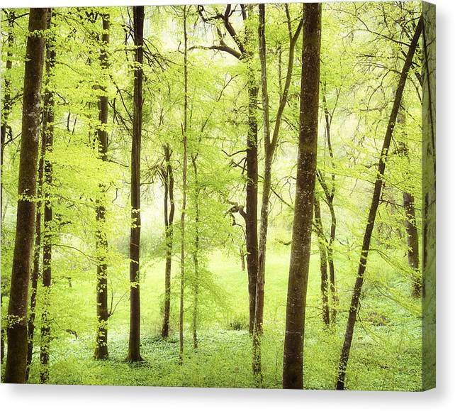 Limited Time Promotion: Bright Green Forest In Spring With Beautiful Soft Light  Stretched Canvas Print