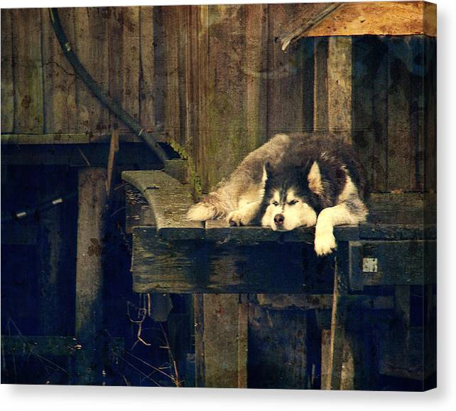 Limited Time Promotion: Dog Days Stretched Canvas Print