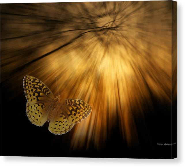 Limited Time Promotion: Following The Light Yellow Butterfly Stretched Canvas Print