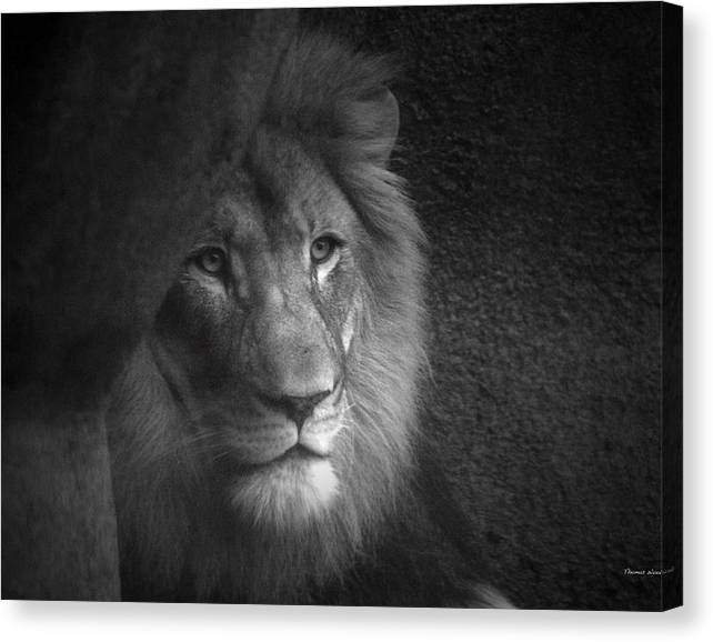 Limited Time Promotion: Mr Lion In Black And White Stretched Canvas Print