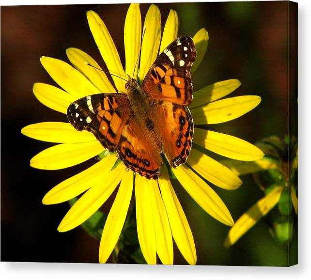 Limited Time Promotion: Butterfly Bloom Stretched Canvas Print